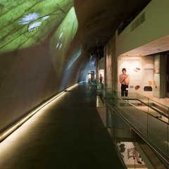 Darwin Centre Fase 2 22.jpg